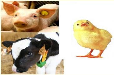 Animal_Feed