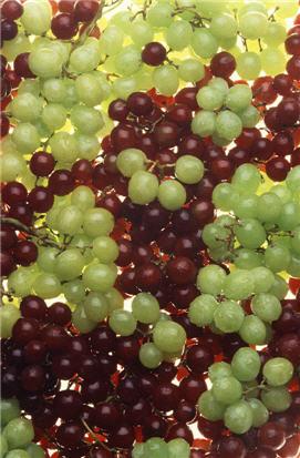 Grapes_USDA