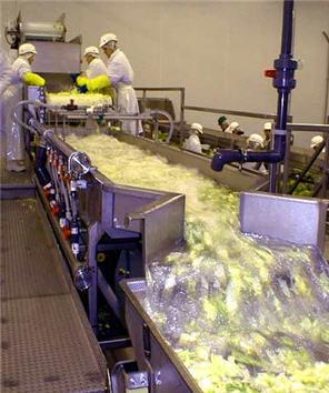 Vegetable_Washer_Conveyor_Heinzen