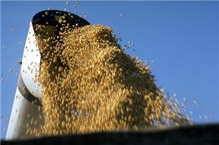 Soybeans_USDA